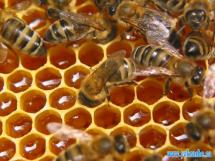 Пчелы и мед